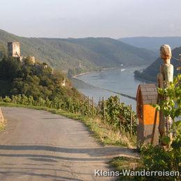 Rheinsteig Blick zum Rhein nach Kaub