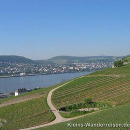 Rheinsteig, bei Bad Honnef