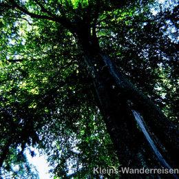 Sauerland naturbelassener Wald