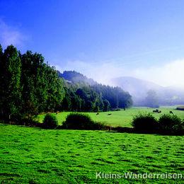 Sauerland Weide im Frühnebel