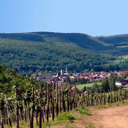 Wandern im Naturpark Soonwald-Nahe ohne Gepäck auf dem Weinwanderweg Rhein-Nahe - 14