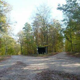 Bushaltestelle mitten im Wald