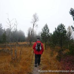 Westweg Hochkopfmoor