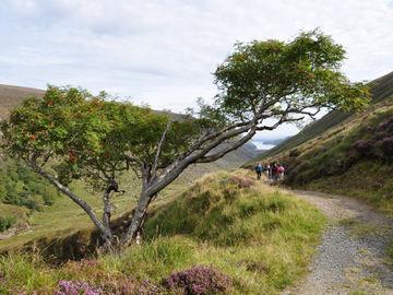 Geführte Wanderreise auf der grünen Insel Irland - Wandern Irland 2