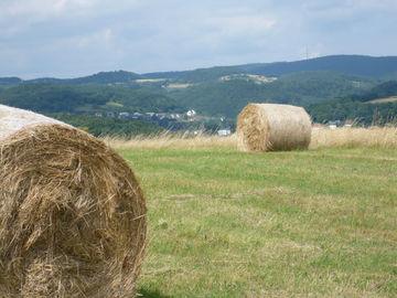 Genussvolles Wandern im waldreichen Naturpark Lahn-Dill-Bergland -  (16)