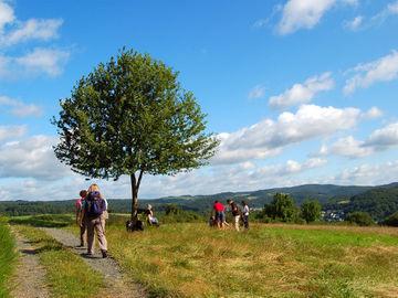 Genussvolles Wandern im waldreichen Naturpark Lahn-Dill-Bergland - DSC_0294