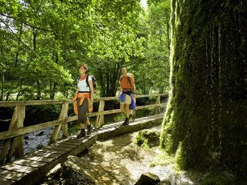 Premium-Wanderweg Eifelsteig ohne Gepäck erkunden - nohner-wasserfall