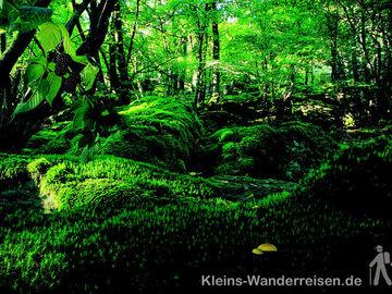 Sauerland romantischer Wald