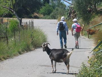 Wandern auf Kreta - geführte Wandertour mit Gepäcktransport - 019