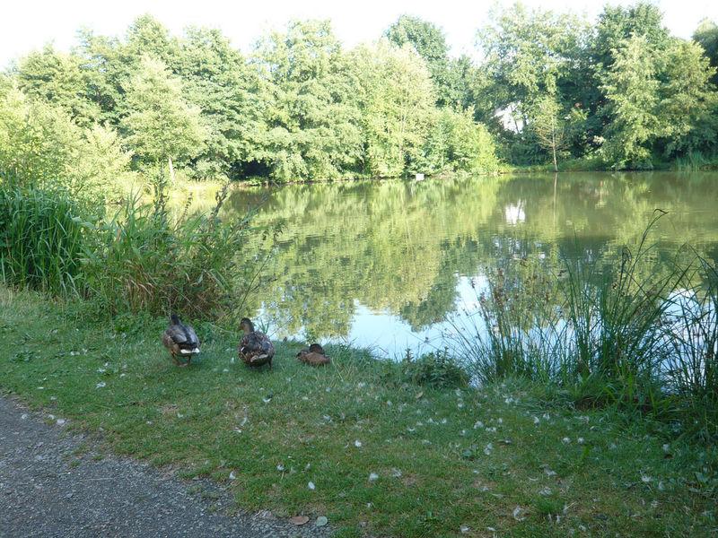 Genussvolles Wandern im waldreichen Naturpark Lahn-Dill-Bergland -  (11)